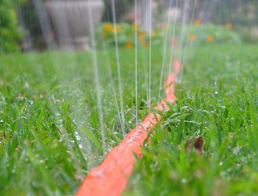 6 Top water-saving tips for the garden