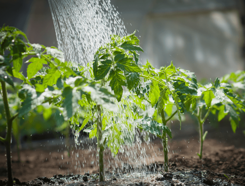 Garden well and still save water? You can do it!