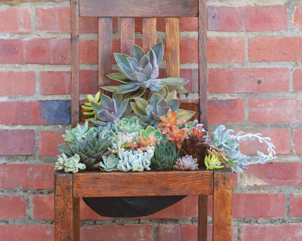 DIY Succulent Seat