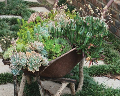 Up-Cycling in the Garden