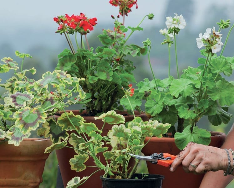 Pruning Is Part Of Plant Carepruning With Confidence Tanya Visser