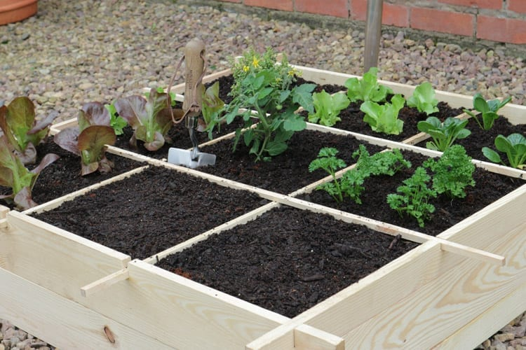 8 Simple Steps to Planting Your Own Veggie Garden