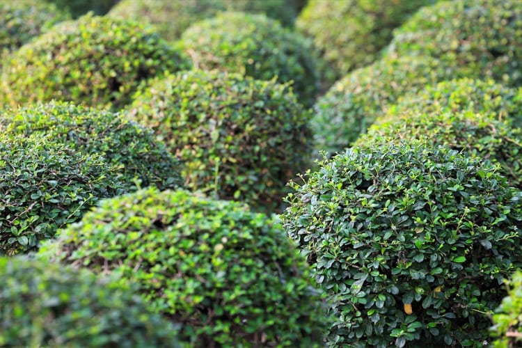 Pruning Guide for Different Plants – a How To