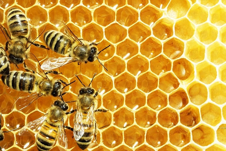 How To Classify and Identify Different Types of Bees