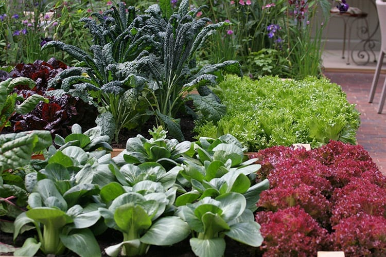 Don't slow down now! Growing Autumn Vegetables