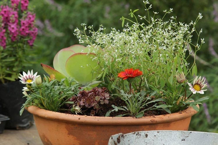 No water? No worries! How to make your garden beautiful with drought tolerant plants