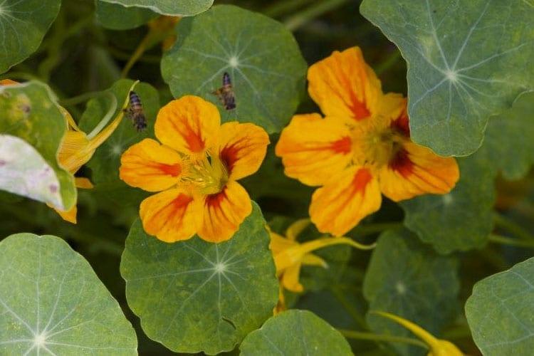 Anyone Can Grow a Garden – Herb Gardening