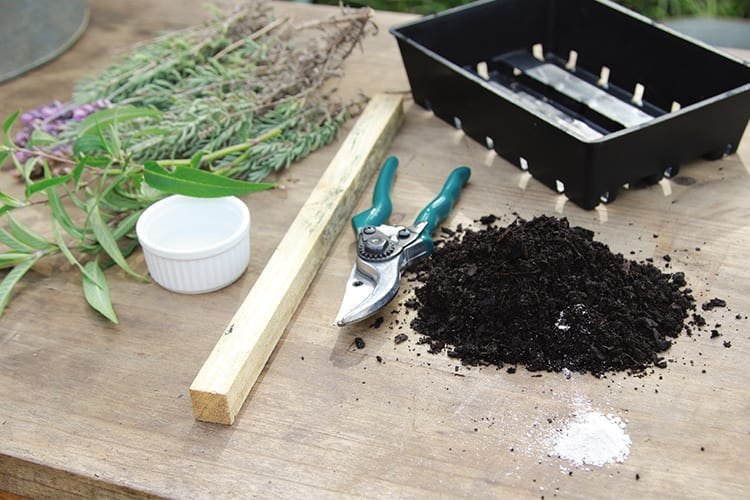 Taking Cuttings and Dividing – Make More From What You Have