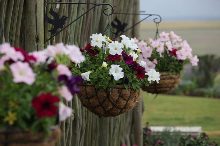 Baskets of Success – How to Plant Hanging Baskets
