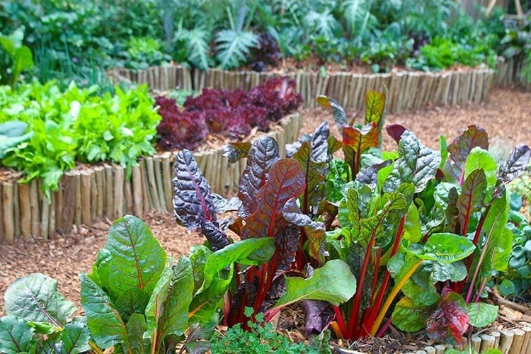Root to Stem: How To Garden With Less Waste