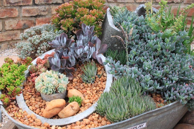5 Reasons Why You Need to Start a Container Garden