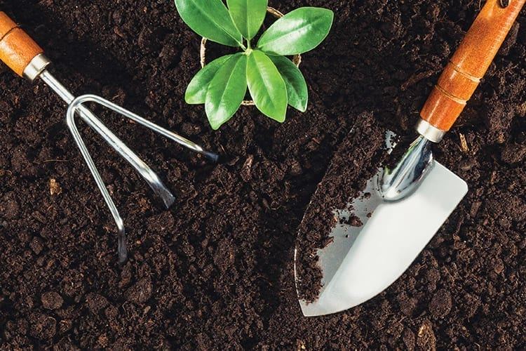 Putting Soil First – How To Clean It Up