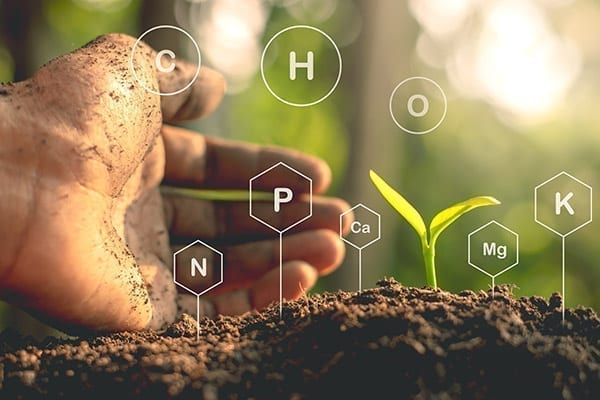 The Carbon Effect in Building Soil and Plant Health
