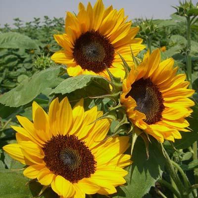 Sun Garden Polen
