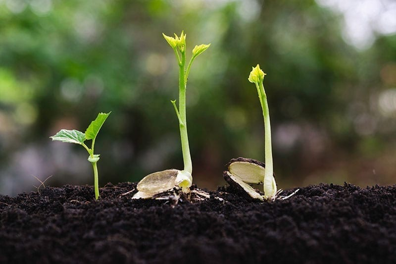 Optimal Plant Health and Plant Nutrition (EcoBuz Range)