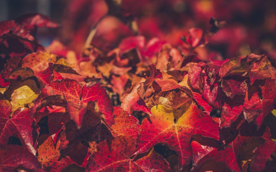 How To Reuse Autumn Leaves In Your Garden