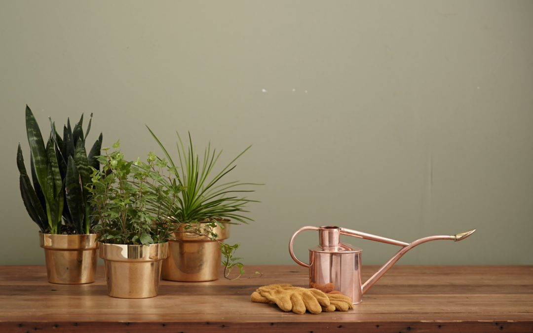 Houseplant Care: Best Practices for Watering Your Plants
