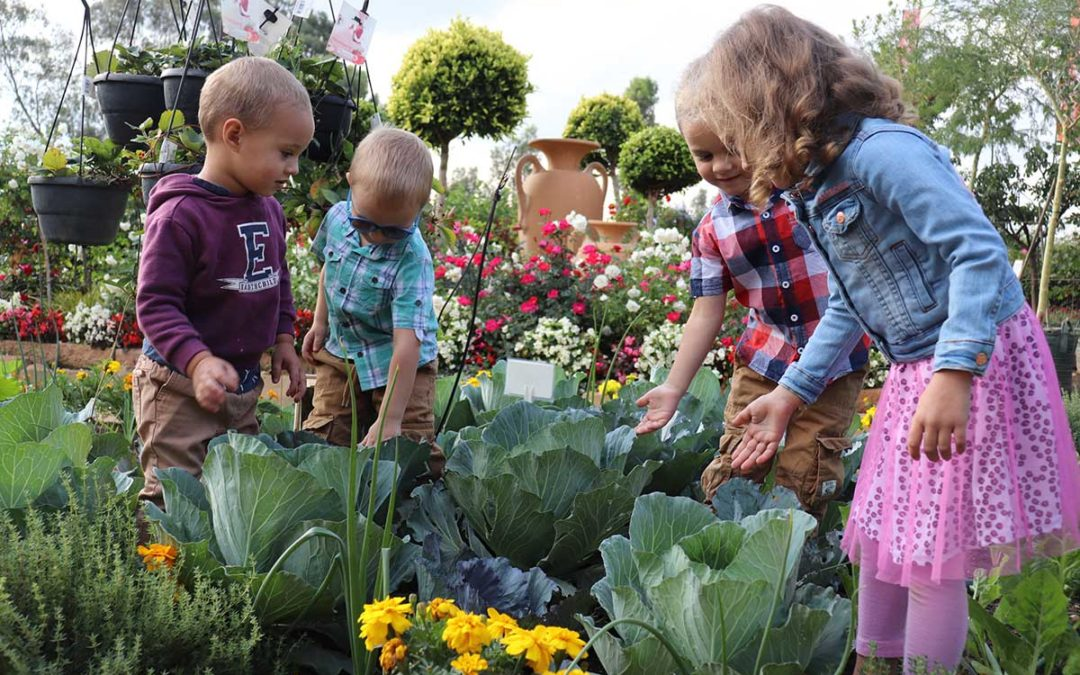 Homegrown Food – Caring For Our Bodies With Plants